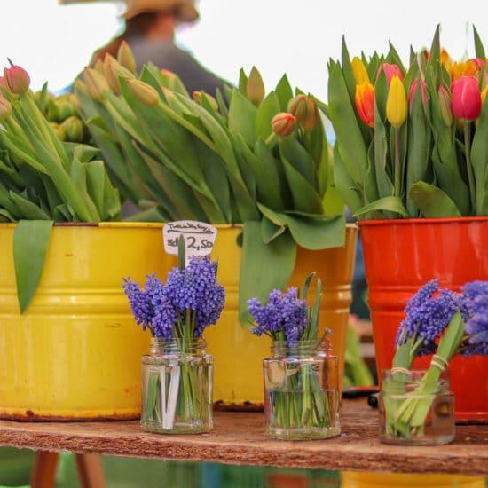 Tulpen Karmelitermarkt Wien
